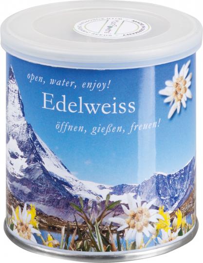 Blume aus der Dose »Edelweiß«.