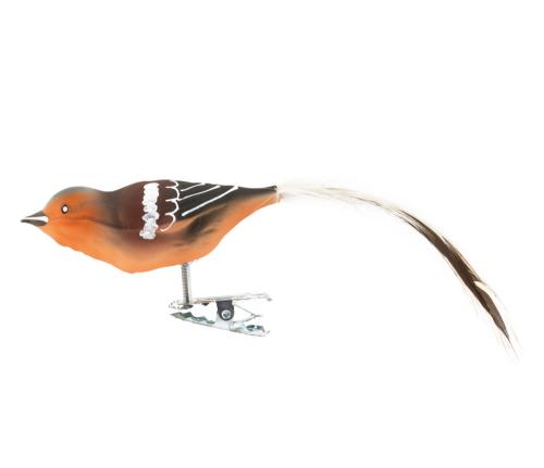 Buchfink Glasvogel.