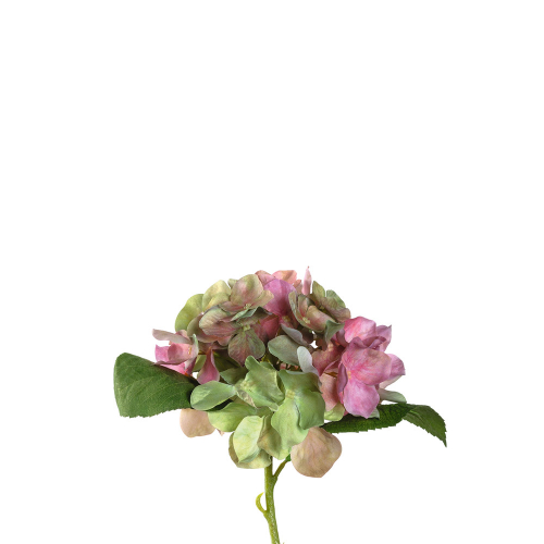 Hortensien, rosé, klein. 12 Stück.