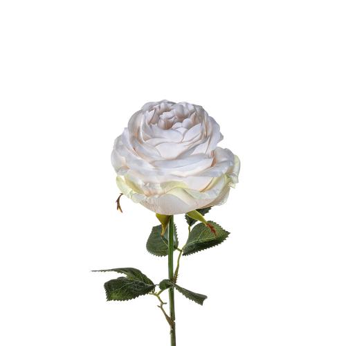 Kleine Rosen, crème. 12 Stück.