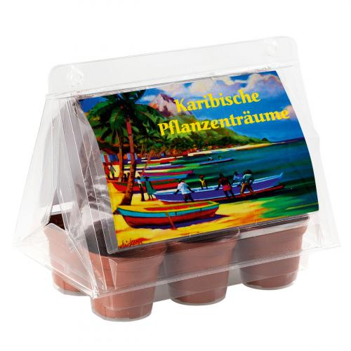 Mini-Gewächshaus »Karibische Pflanzenträume«.