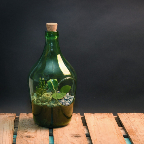 Offene Terrariumflasche, 3 l.