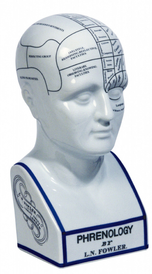 Phrenologischer Kopf.