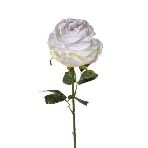 Rose, crème.