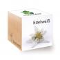 Holzwürfel mit Edelweiß-Samen. Bild 1