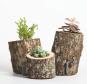 Vasen aus Baumstämmen. Bild 1