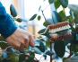 Blätterbürste für Zimmerpflanzen. Bild 2