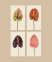 Druck »Anthurium«. Flamingoblume. Variante A. Bild 2