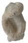 Fossiler Ammonit Bild 2