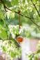 Futterstation Apfel für Vögel, Herz. Bild 2