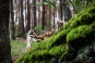 Holzbausatz »Krabbelnde Spinne«. Bild 2