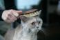 Katzenbürste für die perfekte Fellpflege. Bild 2
