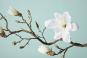 Große Magnolie aus Kunststoff. Bild 2