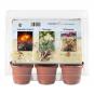 Mini-Gewächshaus »Wüstenpflanzen«. Bild 2