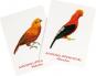 Vogelpaare. Das Memo-Spiel. Bild 2