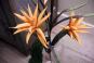 Ananasblume, orange. 6 Stück. Bild 3