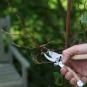 Garten-Multifunktionswerkzeug. Bild 3