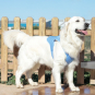 Kühlweste für große Hunde. Bild 3
