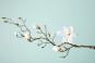 Große Magnolie aus Kunststoff. Bild 4