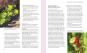 Natürliche Stresskiller. Mehr Energie und Lebensqualität durch aktive Pflanzenstoffe. Bild 5