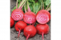 Saatgut-Box »Gemüseraritäten«. Bild 6